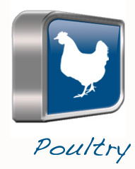 Poultry Product Line - Dawn International